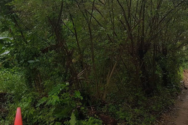 0.25 acres Mangrove Bight