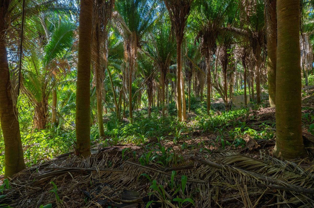 Lot 18-2 Palmetto Bay Plantation, Roatan 2