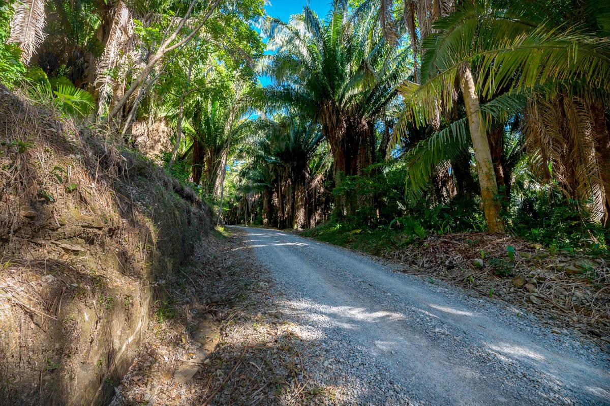 Lot 18-2 Palmetto Bay Plantation, Roatan 3