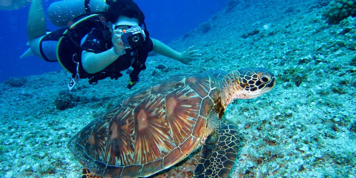 Diver taking pic to a sea turtle